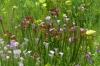 The Stanley Rehder Carnivorous Plant Garden, Wilmington NC