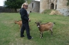 Thea and friendly goats at Château de Tonquédec