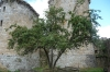 Apple tree, ladened, at Château de Tonquédec
