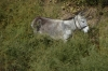 Donkey that grabbed my attention at Kyzyl Qala fortress 1C & 2C, then later 12C & 13C