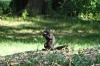 Black squirrel. A walk in Central Park