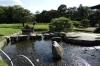 Korakuen Gardens, Okayama, Japan