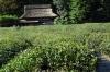 Tea plantation, Korakuen Gardens, Okayama, Japan