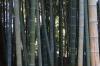 Bamboo, Korakuen Gardens, Okayama, Japan