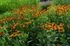 Flowers in the Botanical Gardens in Bezruč Park, Olomouc CZ