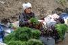 Herb seller. Osh Market