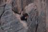 Lion's head? 6km round trip hike to the waterfall from Kojo-Kelen KG