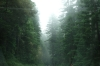Driving through redwood forests between Crescent City and Klamath