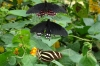 Mariposario (butterfly reserve) at Reserva Natural Atitlan