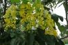 Flowers along the Cinta Costera, Panama City