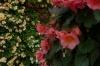 Flower bollards in Pärnu EE