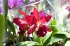 Orchids. Crystal Palace, Petropolis BR