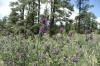 Wild flowers. Oak Creek lookout, AZ