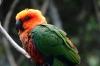 Jandaya Caonure, Birds of Eden Sanctuary, Plettenberg Bay, South Africa