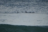 Dolphins. Plettenberg Bay, South Africa