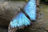 Butterflies. La Paz Waterfall Gardens