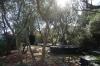 Olive grove in Dalí's house at Portlligat