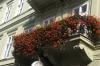 Street flowers in Presov SK