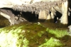 Moss grows under artificial light in the Marble Cave in Gadime XK