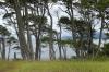 Magellan's Beech Forest (Wind Forest). Straits of Magellan Park CL
