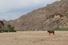 Lone horse. A walk along the Fish River, Ai-Ais Hot Springs, Namibia