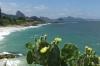 Succulents and Praia do Diabo (Devil's Beach) at Ponta do Arpoador, Rio de Janeiro BR
