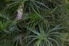 Bromeliads, Jardim Botânico, Rio de Janeiro BR