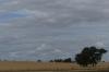Goorambat landscape VIC