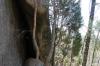 Rock shelter in Yeddonba Aboriginal Cultural site VIC