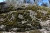 Moss, Yeddonba Aboriginal Cultural site VIC