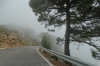 Driving through the mist of the Paraje Naturel Los Reales de Sierra Bermeja, up to 900m
