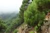 Driving through the mist of the Paraje Naturel Los Reales de Sierra Bermeja, up to 900m