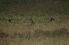 Spot the Impalas. Lake Nakuru National Park, Kenya