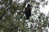 Go Away Bird. Lake Nakuru National Park, Kenya