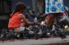 Pigeons in Plaza de la Cultura