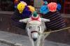 I'd feel a bit of a donkey, too. San Miguel de Allende