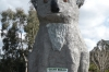 Giant Koala at Dadswells Bridge on the Great Western Highway