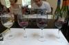 Wine tasting at Loma Larga Vineyards (Long Hill), Casablanca Valley CL