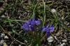 Wildflowers. Batrint AL