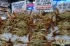 Huge Duneness Crabs at the Pike Place Market, Seattle