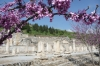 Flowers of Ephesus