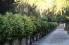 Eram (Paradise) Botanical Gardens