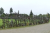 Hill of Crosses near Šiauliai LT