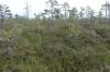 Heather. Wilderness Trip in Soomaa National Park EE