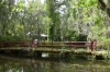 Bridges in the Magnolia Plantation and Gardens near Charleston SC USA