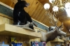 Dead animals at Wall Drug Store SD