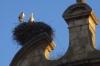 Storks nesting in Lerma ES