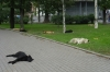 Dogs asleep in Gorkovskaya.  A good life. St Petersburg RU