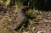 Lizard at Murphy's Haystacks