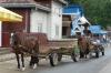 Horse & cart, Bukowina region, Romania